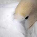 Sleepy Swan by Tiffany Dryburgh