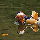 Mandarin Duck by Susie Peek