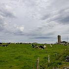 Dairy Farm and a Stormy Sky by Debbie  Roberts