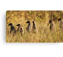 Banded Mongoose - African Wildlife Background - Band of Brothers Canvas Print