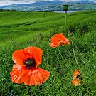 Poppy Landscape by Fraser Ross