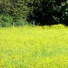 Buttercup Field. by Livvy Young