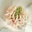 Heart of Magnolia by © Kira Bodensted