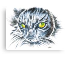 Toby green eyed cat Canvas Print