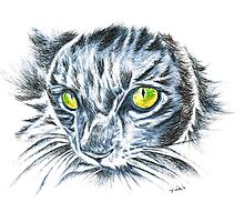 Toby green eyed cat Photographic Print