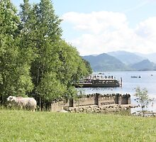 Derwentwater Sheep 2 by MFleming