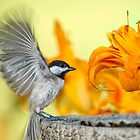 Chickadee in Day Lily Garden by Bonnie T.  Barry