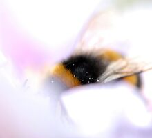 Dreamy Bee by rosie320d