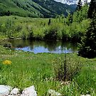 Summer in Aspen by Michael J Armijo
