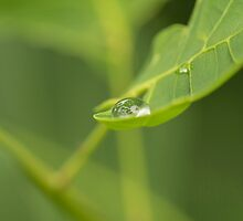 Droplet on a leaf by Josef Pittner