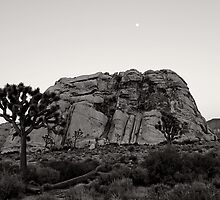 Joshua Tree and The Rock by Kent La Gree