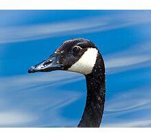Portrait of a Goose Photographic Print