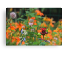 Standing Out In The Crowd  Canvas Print