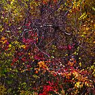 autumn leaves design 2 by Brent Fennell