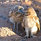Owlet Kisses by Sue  Cullumber