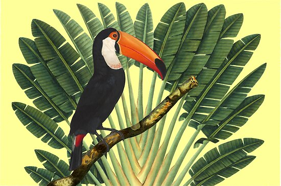 Toucan Tropics by historicnature