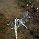 Blue Dragonfly by Yvonne Emerson