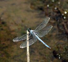Blue Dragonfly by Yvonne Emerson