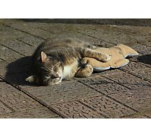 Grey cat sleeping with toy fish Photographic Print