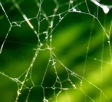 Abstract Spider Web by kfisi
