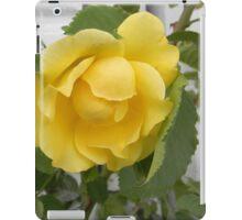 Yellow Rose Against White iPad Case/Skin