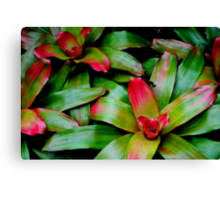 Pink and Green Canvas Print