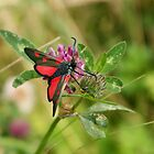 Five Spot Burnet Moth by Jazzdenski