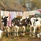Wash Day Chaos by Trudi's Images