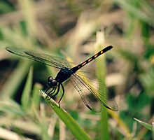 Dragonfly in Summer by Kadwell