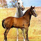 Arabian Mare & Foal by Janice O'Connor