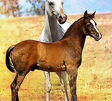 Arabian Mare & Foal by Janice O'Connor