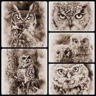 Owl Sketch Collection by fantasytripp