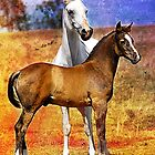 Grey Arabian Mare & Colt Foal by Janice O'Connor
