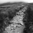 Rocky Path - Yorkshire by Rhys Herbert
