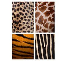 Textures of the Wild Photographic Print