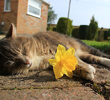 Tabby cat holding daffodil by turniptowers