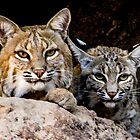Arizona-Sonora Desert Museum by Linda Gregory