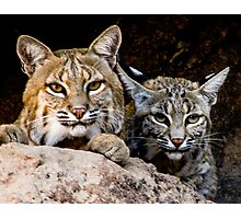 Two Bobcats Photographic Print