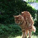 My beloved Cat by HeklaHekla