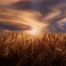 Wheat Field  by Cliff Vestergaard