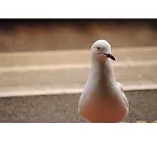 Seagull Death Stare Photographic Print