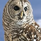Barred Owl by Yukondick