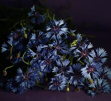 Bouquet Of Cornflowers by Irina777