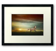 Stallion In The Sunset Framed Print