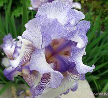 Inkblot Iris by MarianBendeth