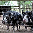 Just Us Pigs by SuddenJim