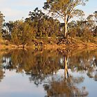 Late Afternoon Reflections on the River Murray by Carole-Anne