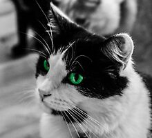 Cat Green Eyes by KLEphoto-design