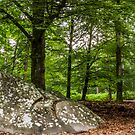 Forest of Fontainebleau, Barbizon by David Mapletoft