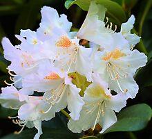 azalea by waylander99uk